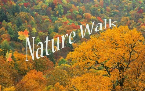 Hobson's Annual Nature Walk