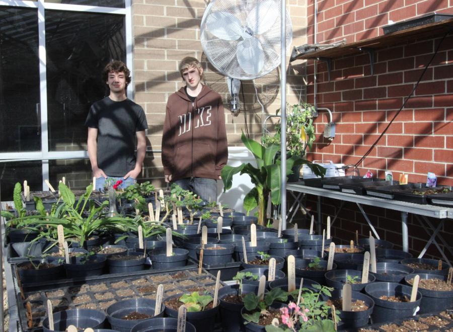 CCEOC Runs a Greenhouse Business