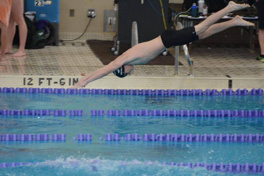 Sophomore Drew Engler dives into the pool. Last season, Engler was the top dog in the 100-yard breaststroke with a 1:08.85.