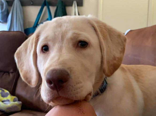Aubrey Guyer's pup Oakley brings her joy during COVID.